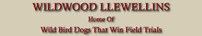 Wildwood Llewellins
